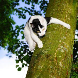 cat-1494924_1280