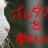 猫に学ぶボルダリング講座!保持力、柔軟、メンタルまで!!猫の実践動画まで!
