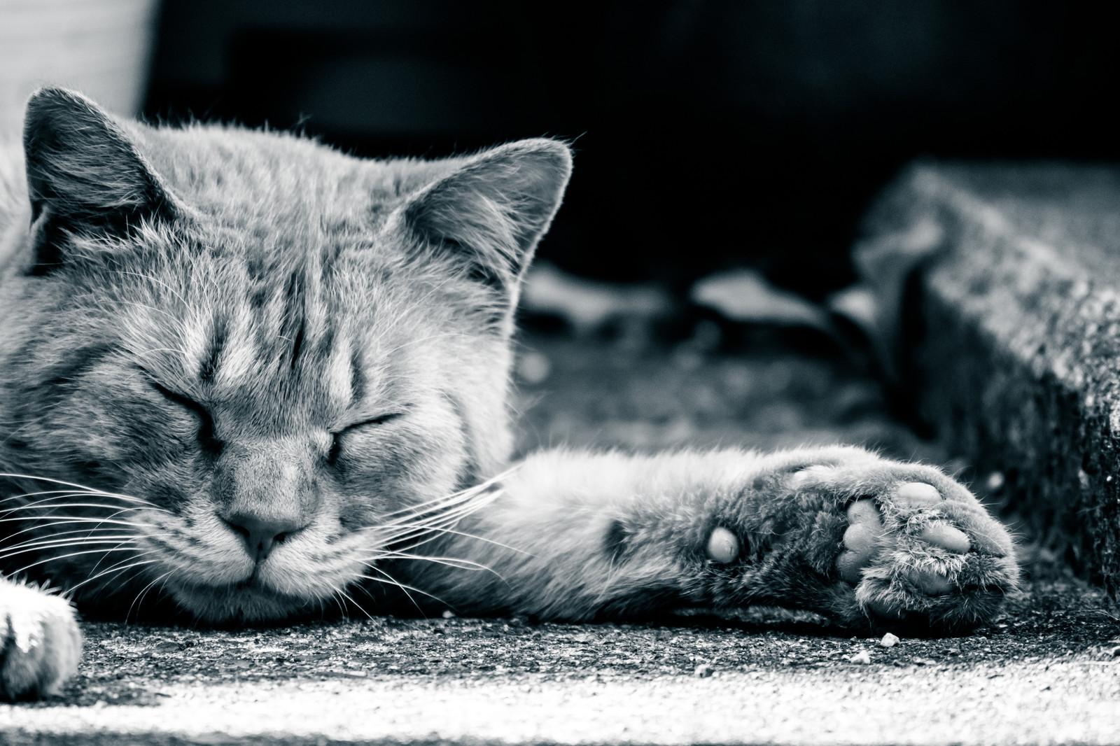 猫の肉球の雑学を知れば、猫の気持ちが分かるかも!?肉球雑学集めました!