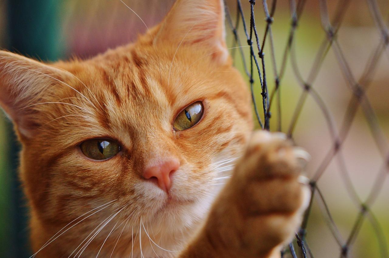 猫のしっぽの動きで気持ちがわかる!?役割は?可愛いだけじゃないしっぽの秘密!