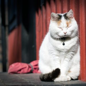 cat-1276634_1280