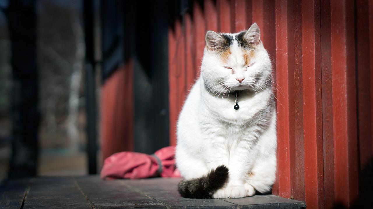 猫のゴロゴロ音の真実!嬉しいときだけじゃなかった!?猫雑学です!