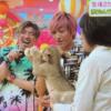 【動画】EXIT兼近「ヒルナンデス」でライオンの赤ちゃんにミルクあげ挑戦!「かわいすぎる」と話題